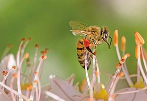 研究發現:蜜蜂能理解「零」概念