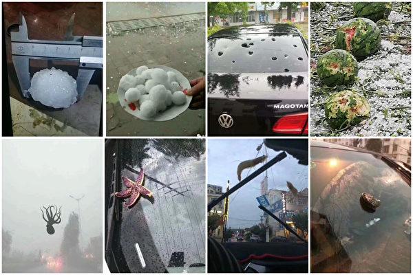 青島鵝蛋般大冰雹砸穿車窗,天降海鮮。(網絡圖片合成)