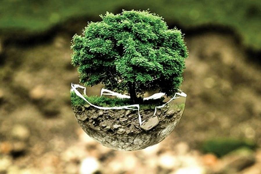 全球悲劇 完整森林年損面積超過奧地利