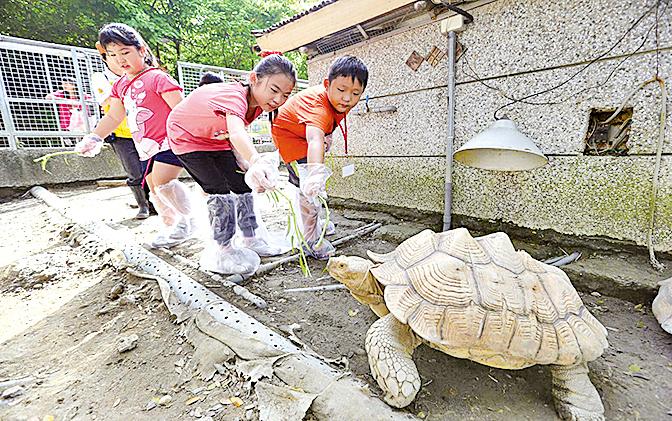 參觀台灣壽山動物園夏令營。圖為小朋友與象龜近距離接觸。(大紀元資料圖片)