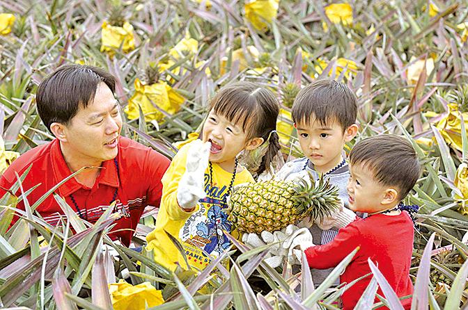 台灣的農村體驗夏令營,讓小朋友親自體驗採摘菠蘿 樂趣。( 大紀元資料圖片)