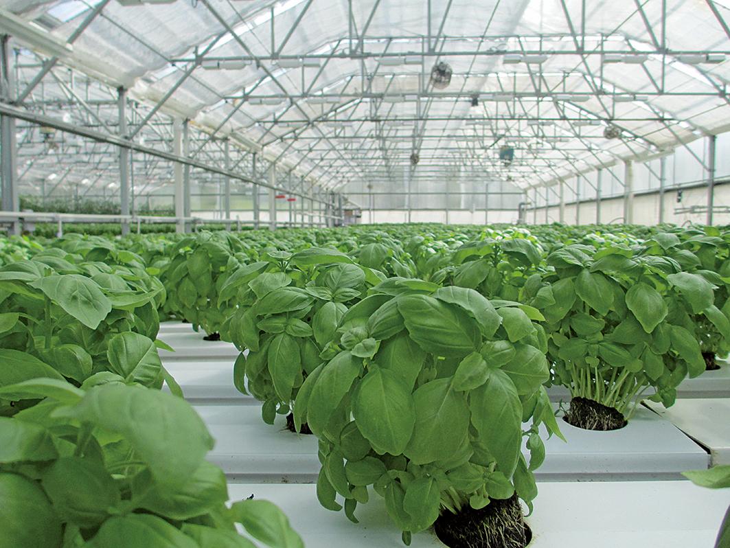 根據研究預測,全球暖化將讓各地蔬菜產量下滑,導致菜價上漲,食安和健康都受波及。(Creative Commons)