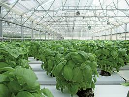 全球暖化 蔬菜減產 危及食安