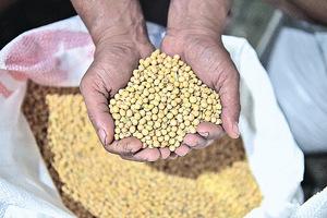 北京進口五國大豆關稅歸零 涉印度等五國均非大豆出口國  疑似增中間商再轉賣中國