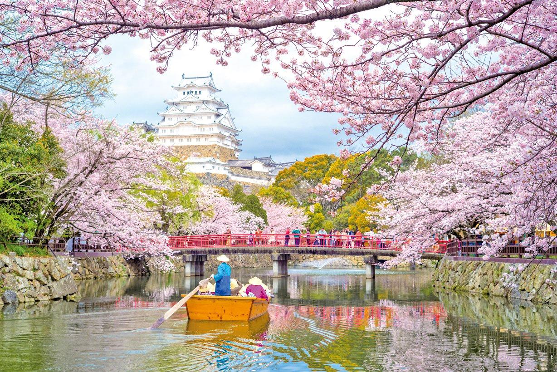 櫻花掩映的姬路城浪漫唯美。