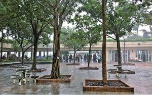 黃雨期間青年疑遭雷擊死亡