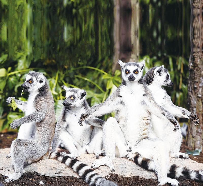 馬達加斯加遊記(四)希望生命可以生生不息
