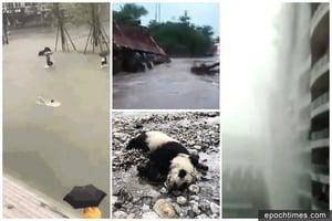 四川暴雨多座橋梁被淹 熊貓溺亡 下水道無修整惹民怨