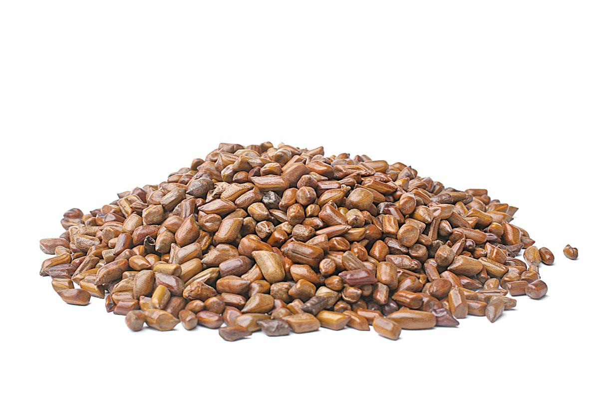 決明子具有清肝火、祛風濕、益腎明目等功能。