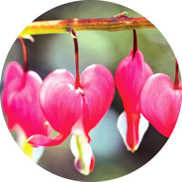 感受大自然的傑作 九種奇特而美麗的花卉