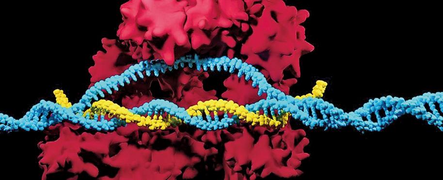 最新研究證實,CRISPR會對DNA造成比預想更廣泛的損害,給患者的健康帶來不良影響。(Meletios verras/istock)