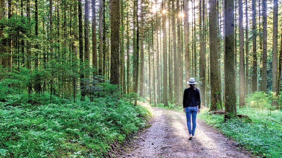 樹木間的網絡 使溝通和語言成為必然