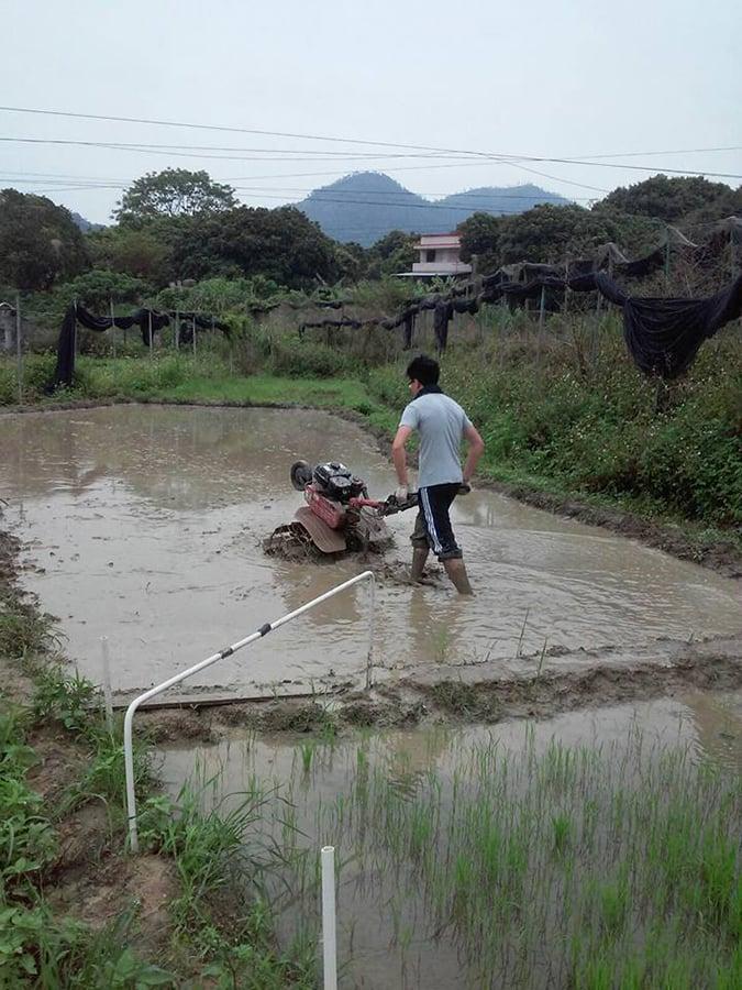 在元朗牛潭尾使用旋耕機進行農耕的家樂。(受訪者提供)