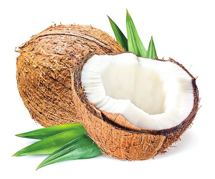 來自生命之樹美味又健康的椰子
