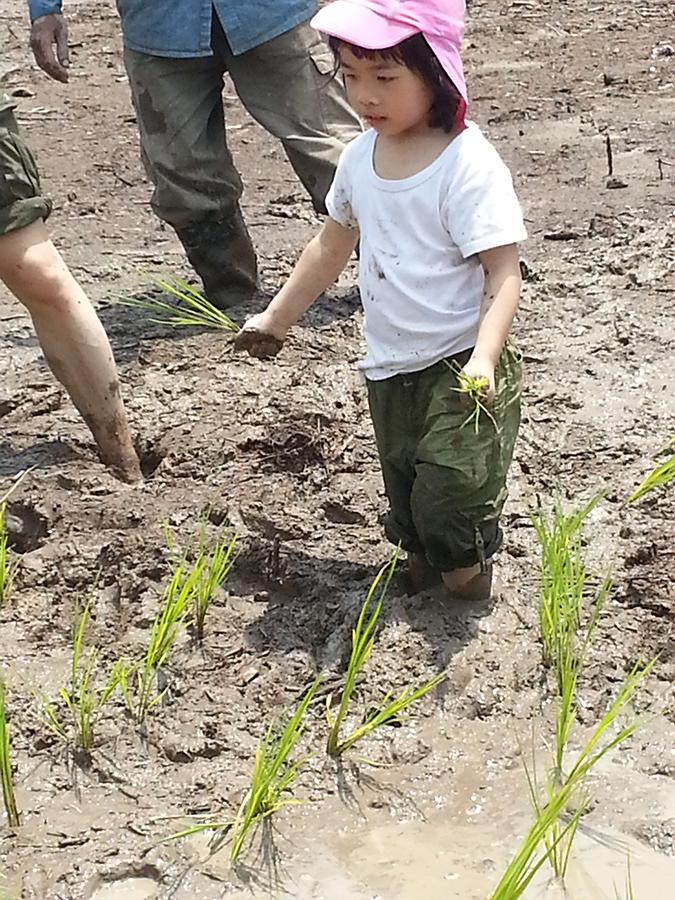 插秧並不難,小朋友體驗務農之樂。(二澳農作社提供)