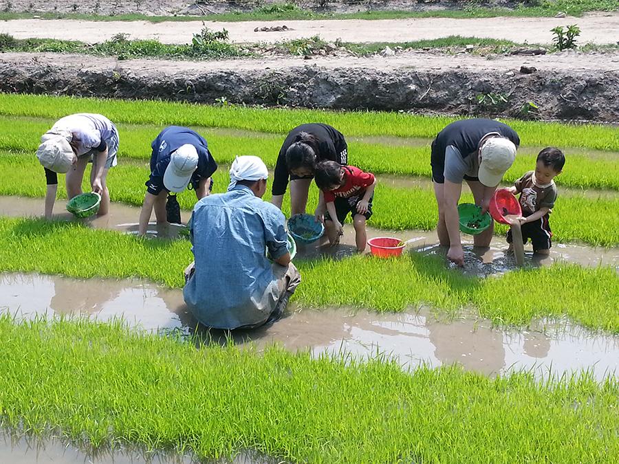 在專人指導下,小朋友們在農田學習插秧。(二澳農作社提供)