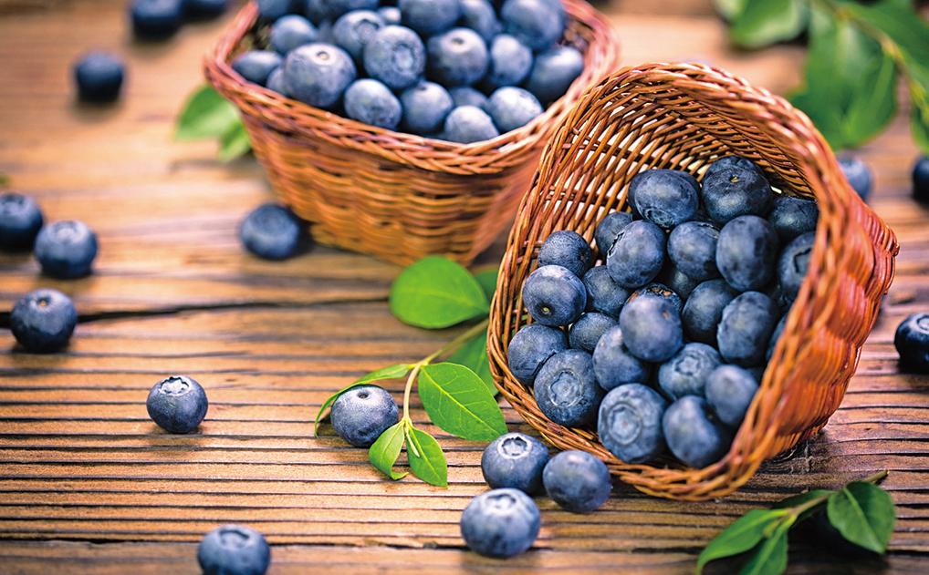 蜜蜂的授粉對多數品類的漿果都極其重要,少了藍莓,早餐美味度大大降低。