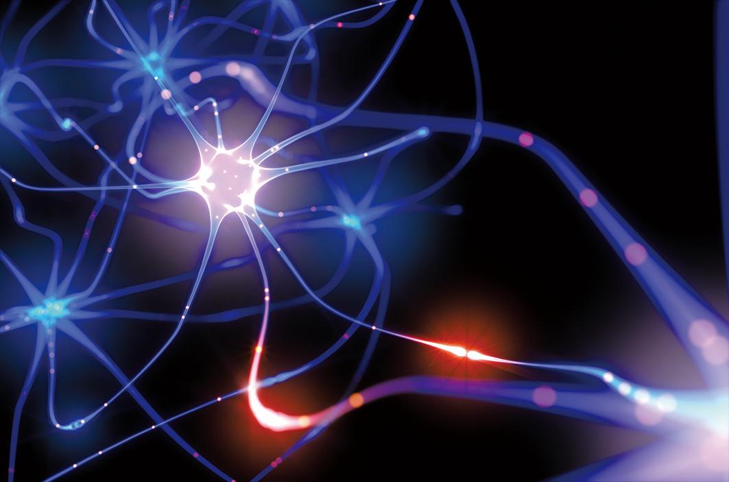 神經元之間傳遞電信號的示意圖。(Shutter Stock)