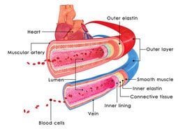 血是紅色為甚麼靜脈血管是藍色?