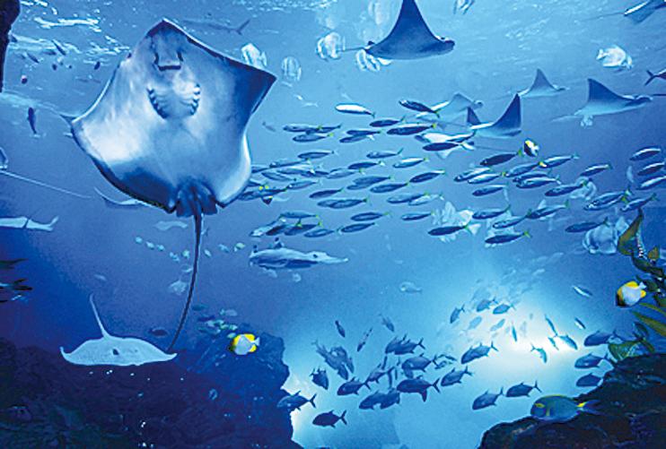Aqua Planet海洋世界。