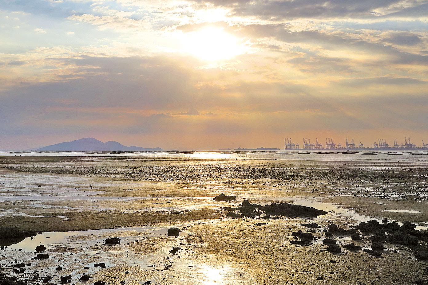 金光灑落在泥灘上,分外奪目。