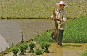 貿易戰加重中國糧食危機