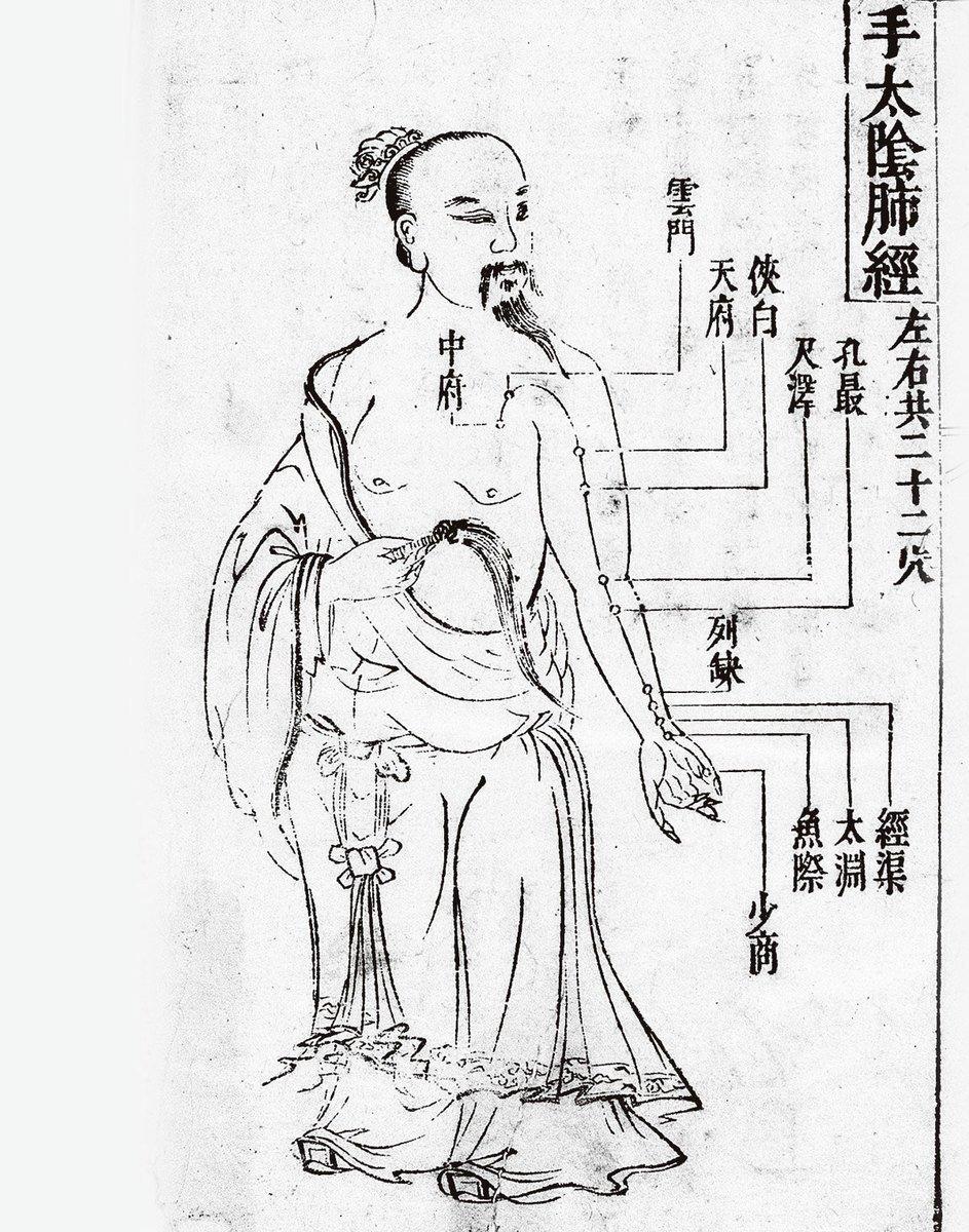 太陰肺經。(維基百科)