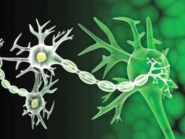 存在無線粒體真核細胞 改寫教科書「生命」定義