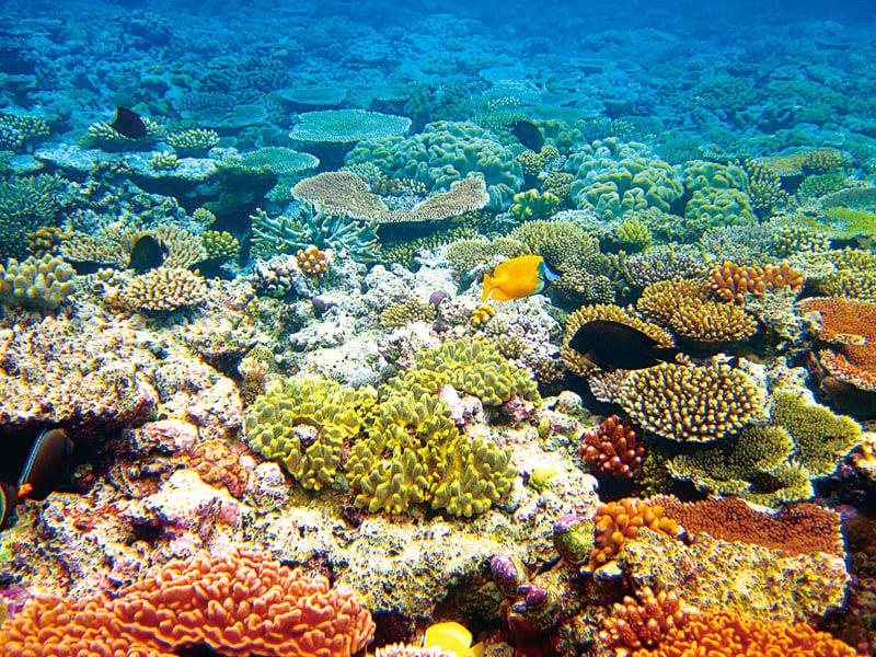 大堡礁海底世界色彩繽紛。(Kyle Taylor/Flickr)