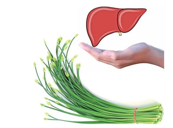 研究發現:韭菜抗糖尿病、護肝