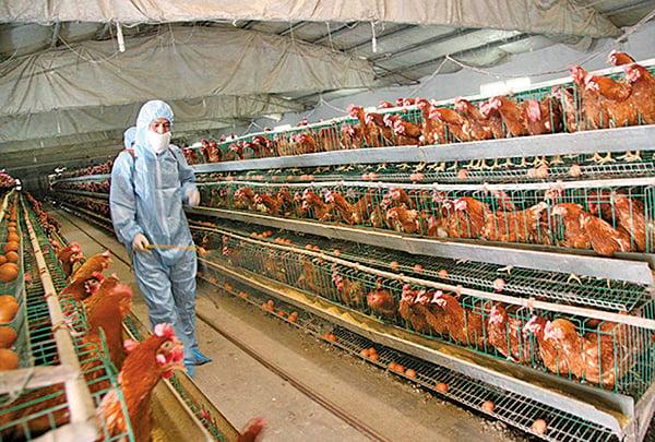 從2013年以後,H7N9的禽流感病毒似乎在中國大陸「紮了根」。(Getty Images)