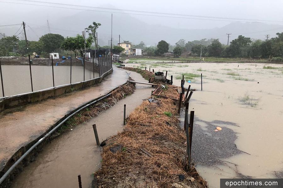 元朗新田小磡村信芯園的農田昨日在暴雨下全被水掩,至今洪水仍未退去。(梁日信提供)
