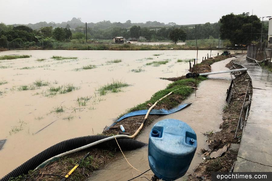 新田農田被水淹損失慘重 信哥:紅雨發得太遲