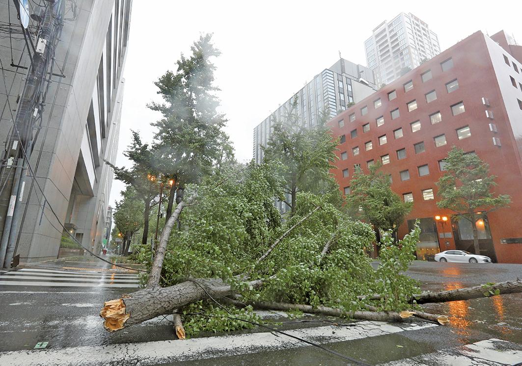 25年來登陸日本最強的颱風燕子9月4日中午左右登陸德島縣南部,圖為一棵大樹被強風吹倒。(AFP)