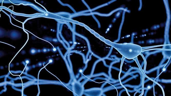 研究人員發現了一種小分子化合物,能夠活化神經系統,使 80 % 的脊髓損傷小鼠恢復了行動能力。(Medical News Today)