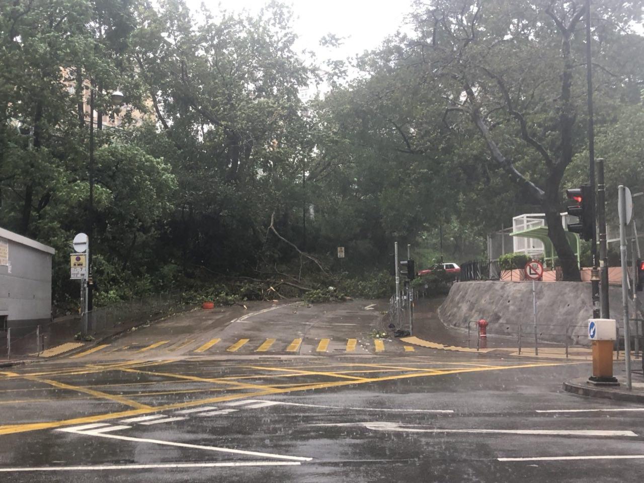 本港多處道路被倒塌樹木堵塞。(梁珍/大紀元)