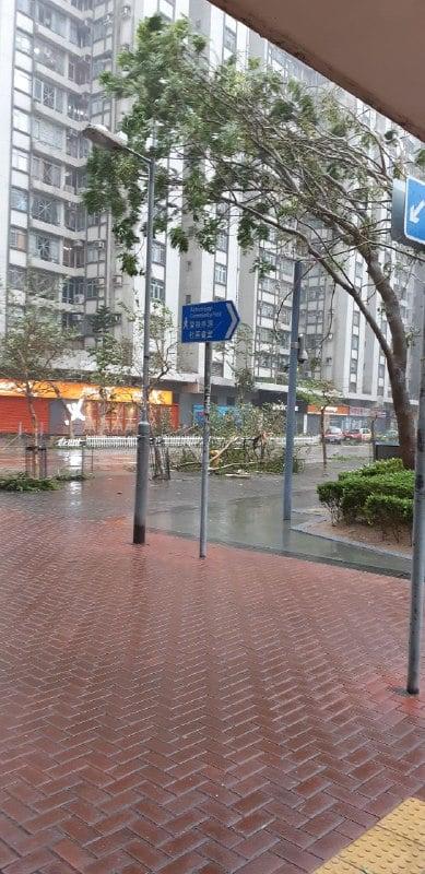 西灣河鯉景灣有樹被吹冧(圖片來源:讀者提供)