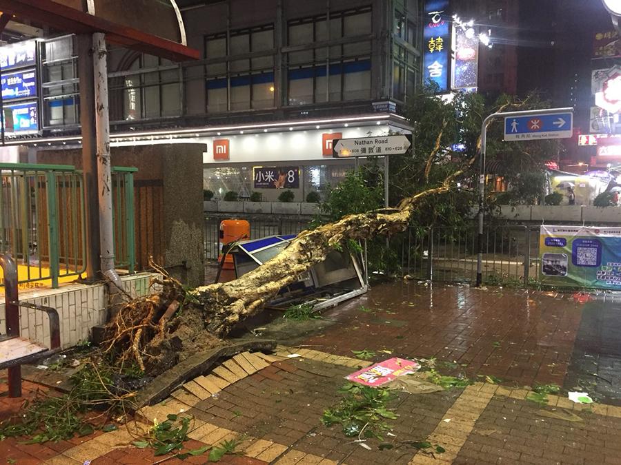 旺角彌敦道豉油街一棵大樹倒下,壓毁一旁的電話亭,橫臥在行人道和兩條彌敦道南行線上。(陳仲明/大紀元)
