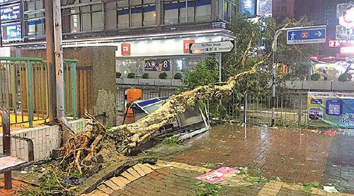 旺角彌敦道有大樹倒塌壓毀電話亭,再橫陳在行車線上。(陳仲明/大紀元)