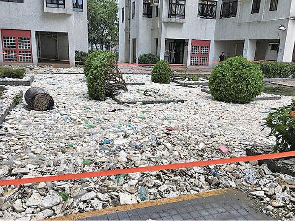 杏花邨不少樹木被強風吹倒,大量圾垃被沖上岸。(大紀元)