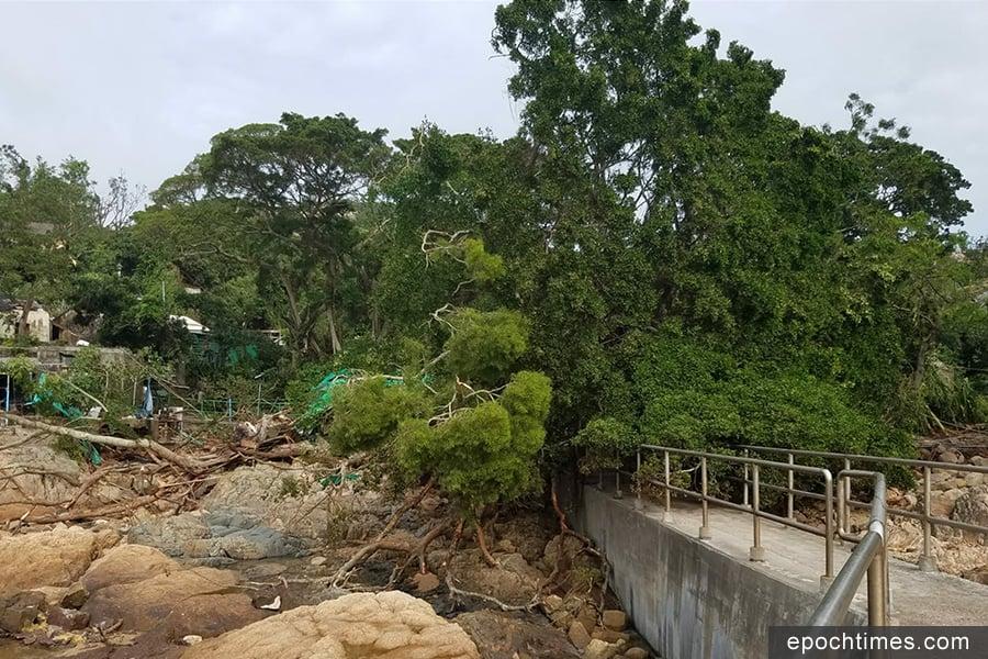 蒲台島公眾碼頭有大樹倒下,阻擋了通道。(圖片來源:蒲台島原居民提供)