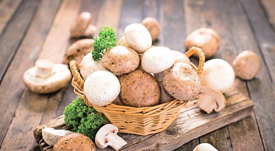 蘑菇含抗氧化劑有助提升老人認知能力