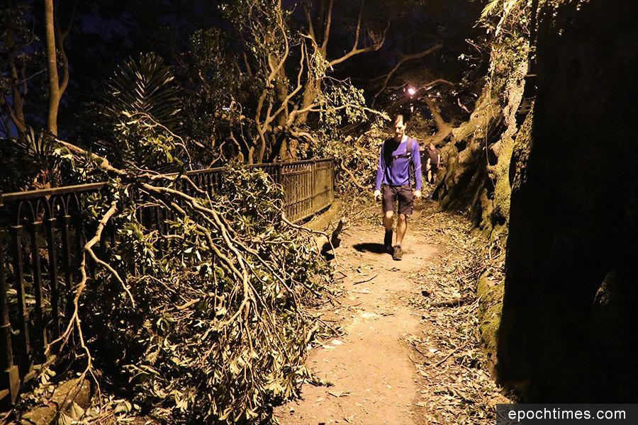 山頂盧吉道大量塌樹擋路 無阻遊人賞維港景