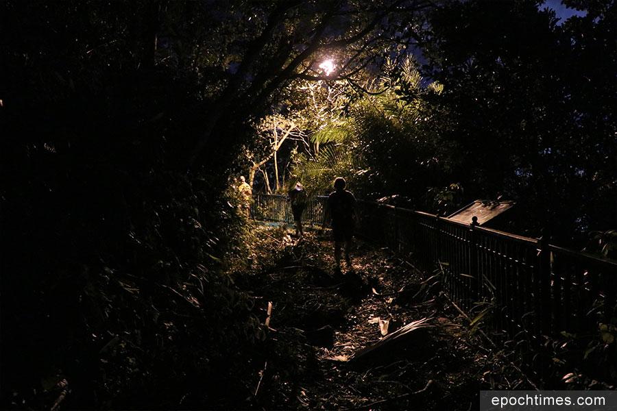 山頂盧吉道沿途佈滿大量倒下的樹木,但仍有不少遊客如常前往。(陳仲明/大紀元)