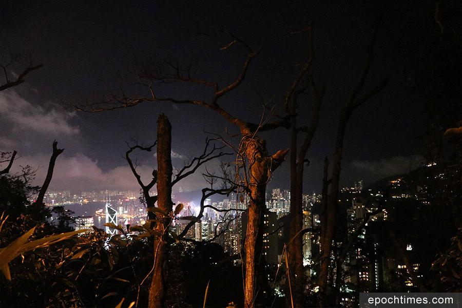 盧吉道旁有不少樹木被吹至斷裂。(陳仲明/大紀元)