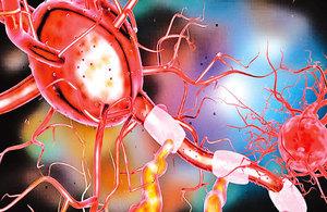 治療大腦和脊髓損傷 神經再生研究獲進展
