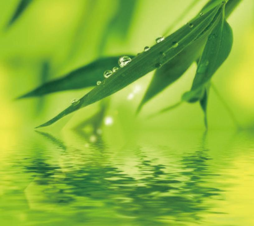 最新研究證實,植物也有觸覺,當被摘掉葉子時,植物能「感覺」到受傷的「痛楚」,「痛覺」信號會從「受傷」葉子傳遍整棵植物。(Fotolia)