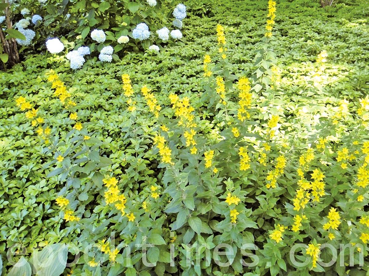 花草也是同一類的走在一條道上(攝影:雲中君/大紀元)