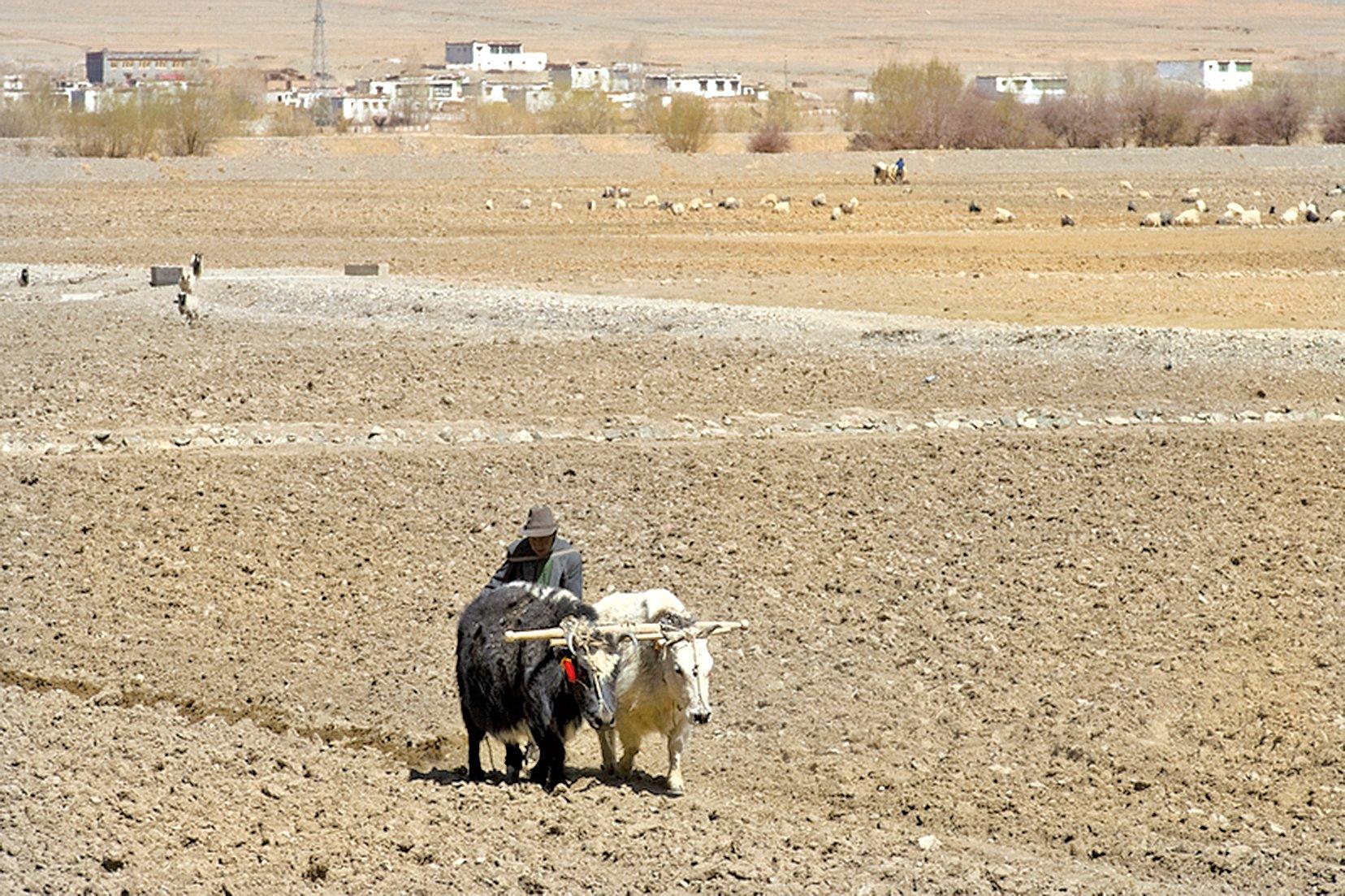 鐵牛的刀片快速在土地上翻攪時,對土地並不溫柔,比起用牛打田,鐵牛打田其實傷土地。(fotolia)