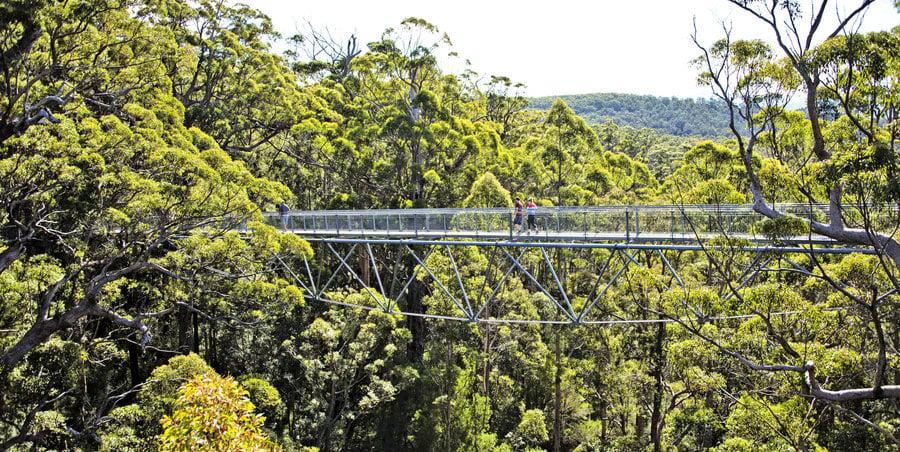 漫步樹冠 穿越樹幹 西澳 樹之旅